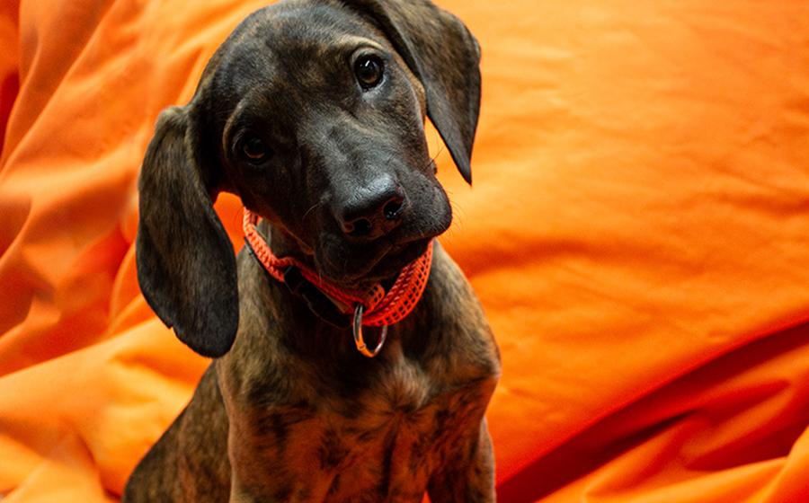 Tierischer Nachwuchs - Bürohund Kira